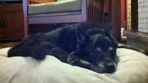 Buddy, Prince of Puppys