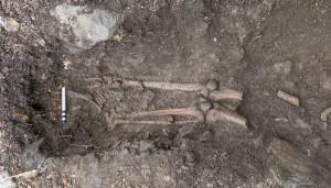 tree-skeleton